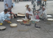 Marrakech, Morocco snake charmers